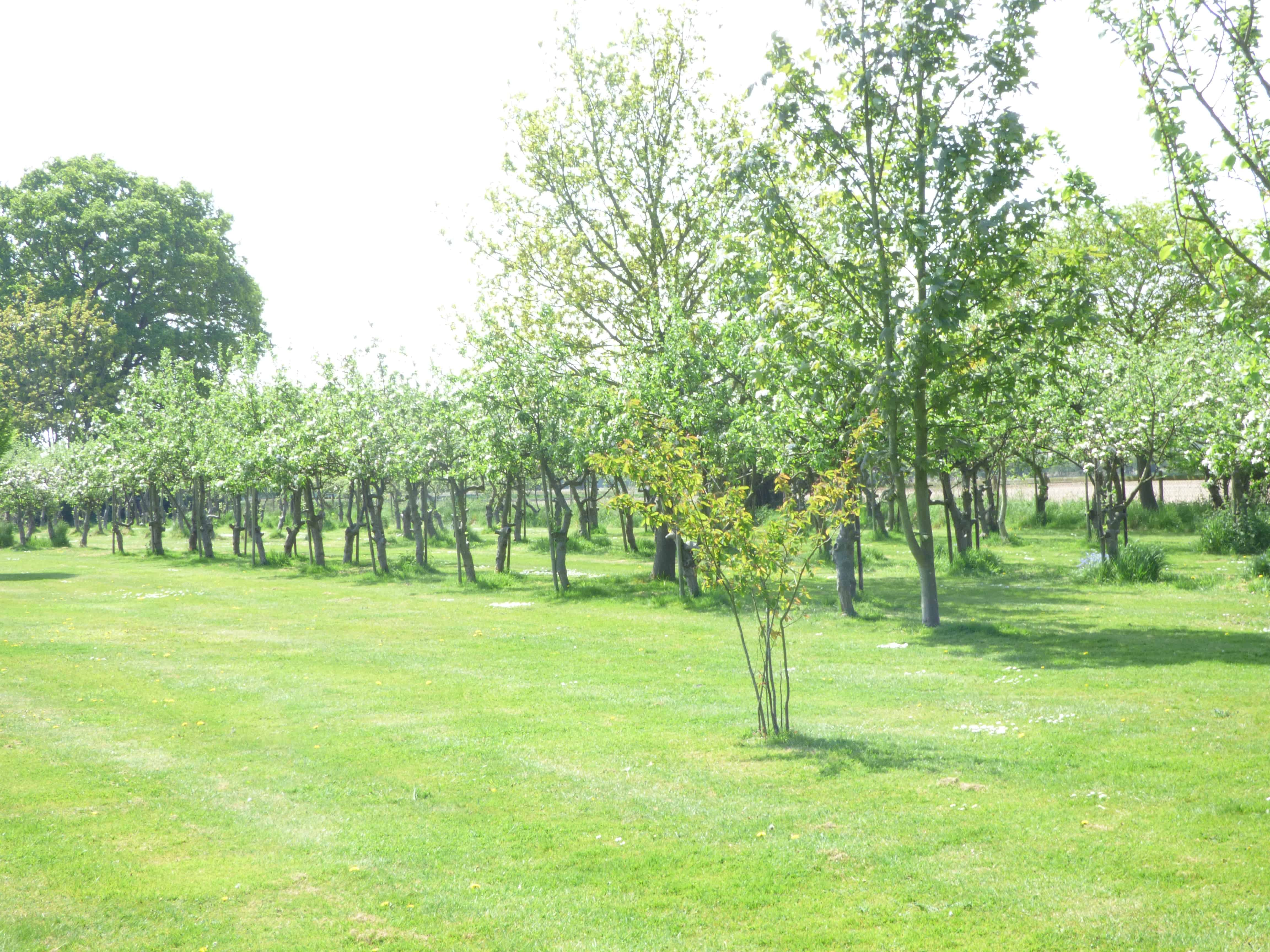 colchester holiday cottages orchard